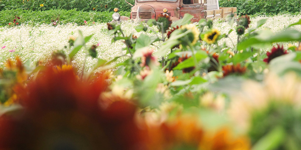 4:30 pm, Sep 4th - Richmond Sunflower Viewing