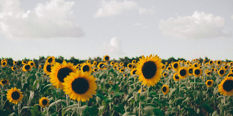 2 pm, August 30th - Richmond Sunflower Festival