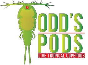 Todd's Pods, live pods, copepods for sale, live copepods for sale, Tisbe Copepods