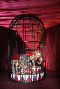 Bizarre Circus