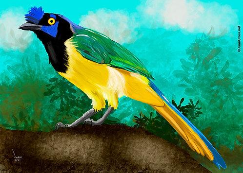 Cuervo verdiamarillo