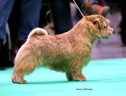 Ronnie Crufts 18.jpg
