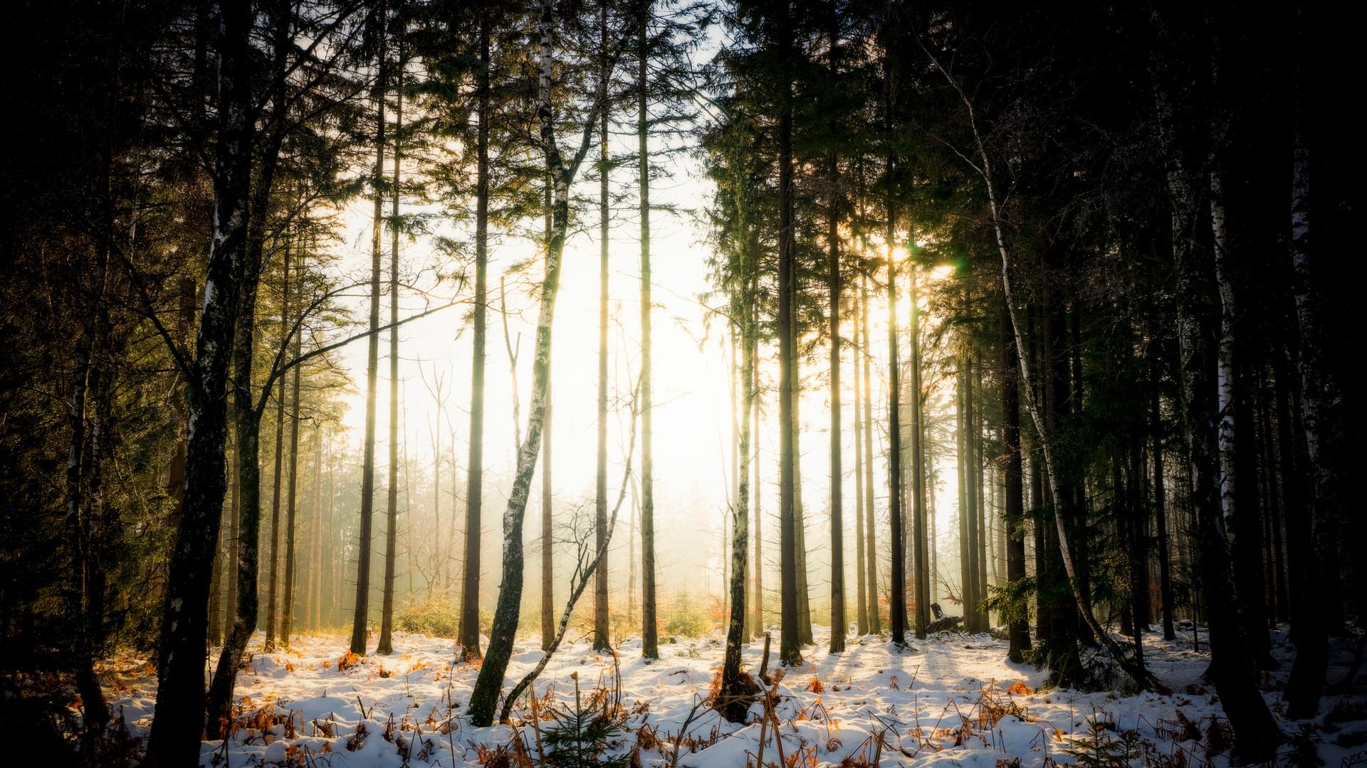 Roetgener Wald, Eifel, Germany