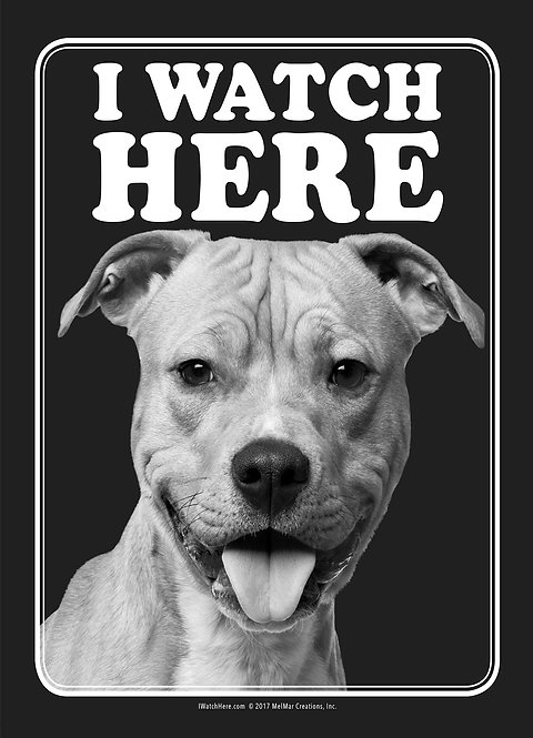 American Staffordshire Terrier (BW)