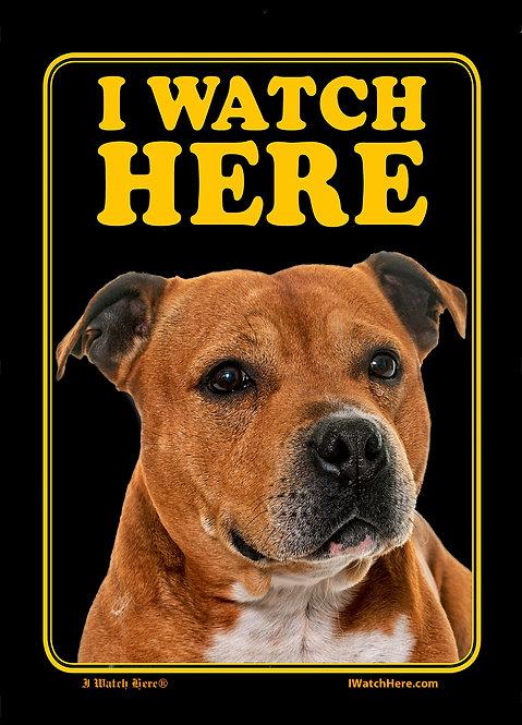 Staffordshire Bull Terrier (BW)