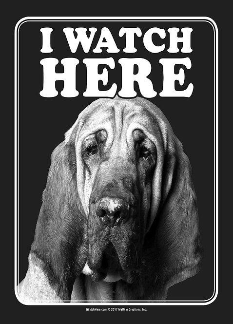 Bloodhound (BW)