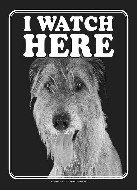 Irish Wolfhound (BW)