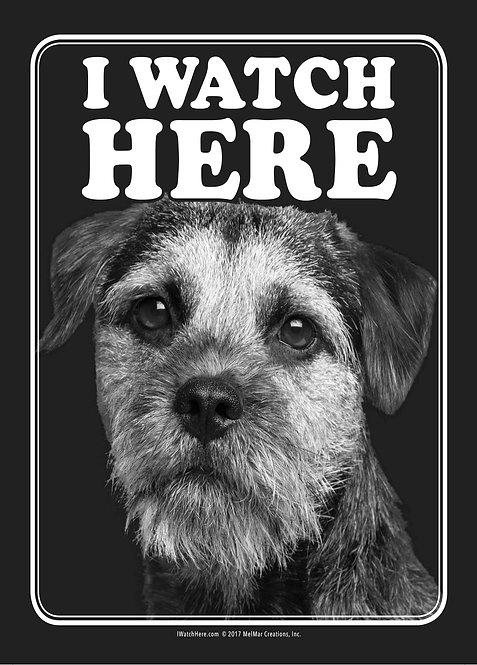 Border Terrier (BW)