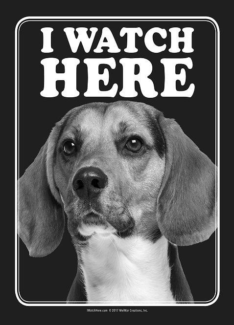 Beagle (BW)