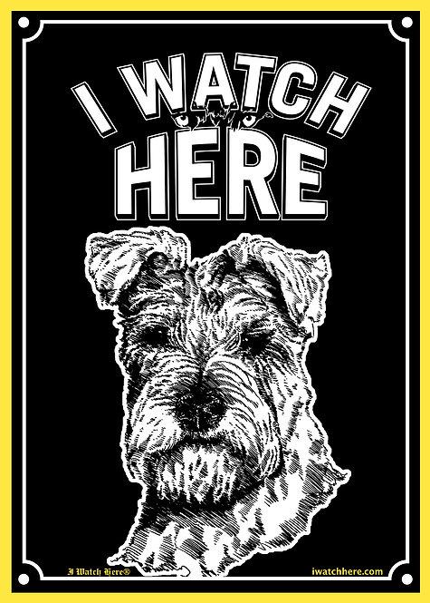 Scottish Terrier 1