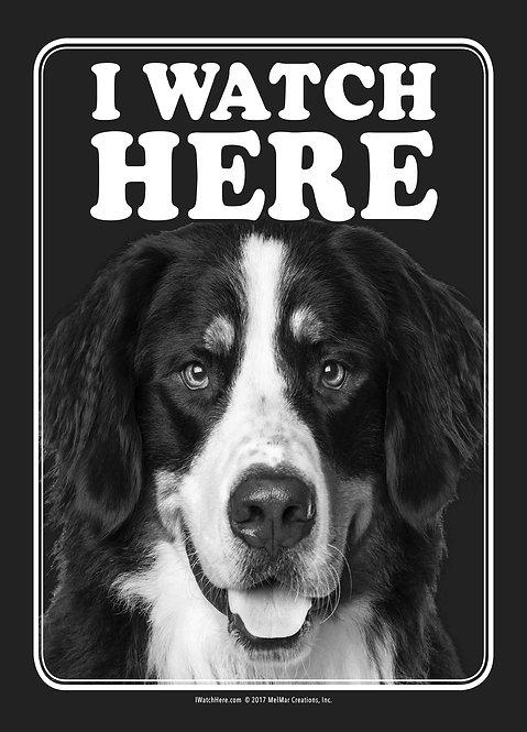 Bernese Mountain Dog (BW)