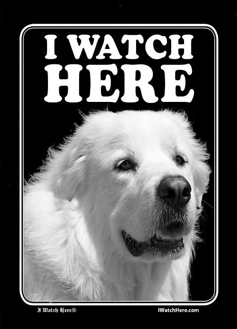 Great Pyrenees (BW)