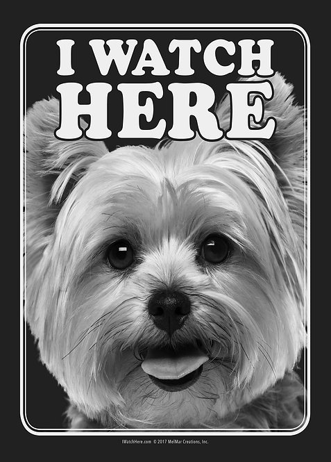 Yorkshire Terrier (BW)