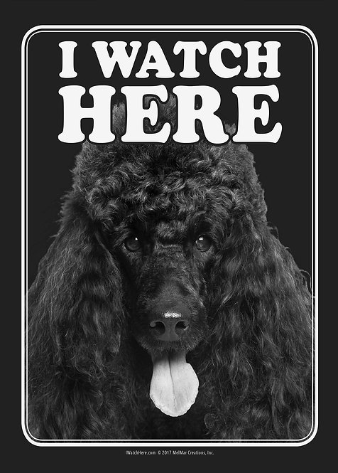 Poodle (Black) (BW)
