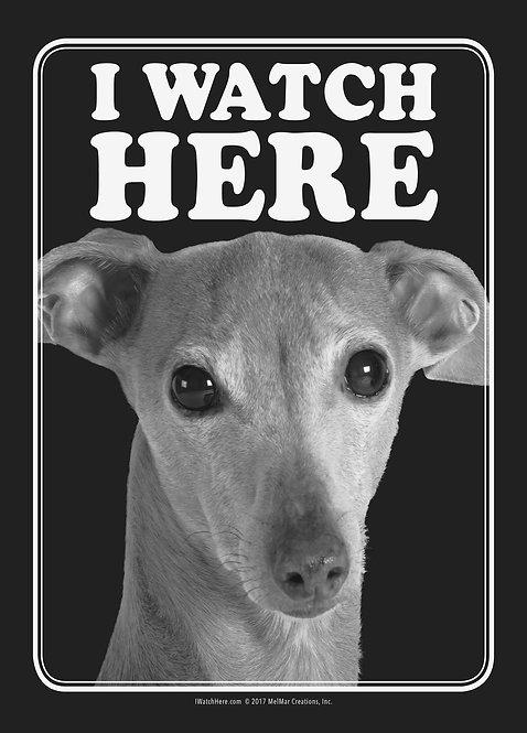 Italian Greyhound (BW)