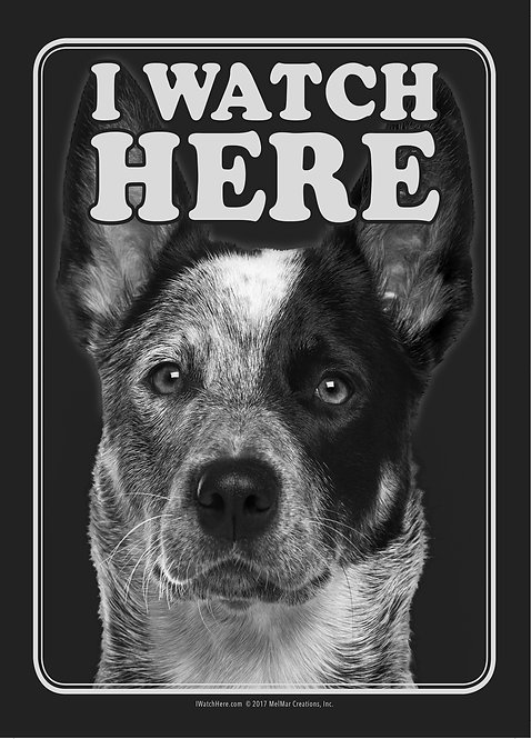 Australian Cattle Dog (BW)