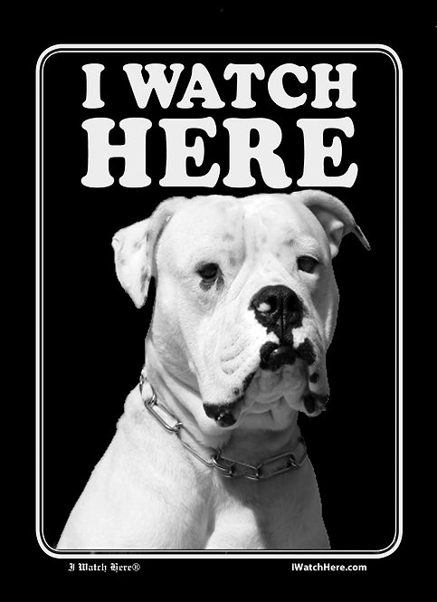 American Bulldog (BW)