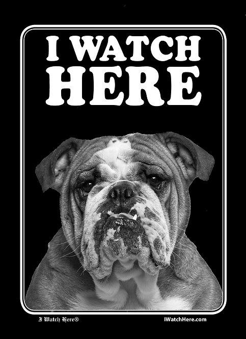 Bulldog (BW)