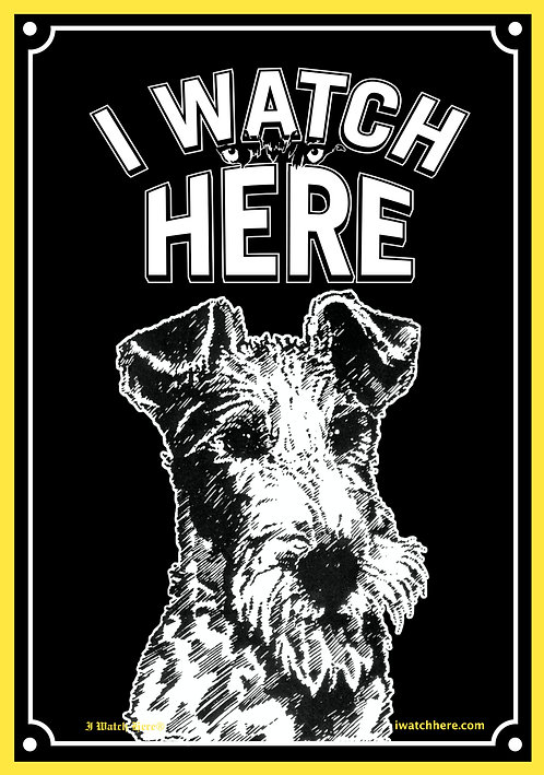 Fox Terrier (Wire-haired)