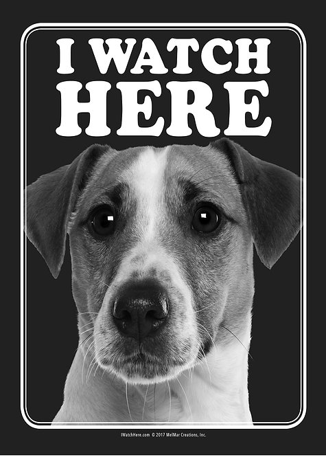 Jack Russell Terrier (BW)