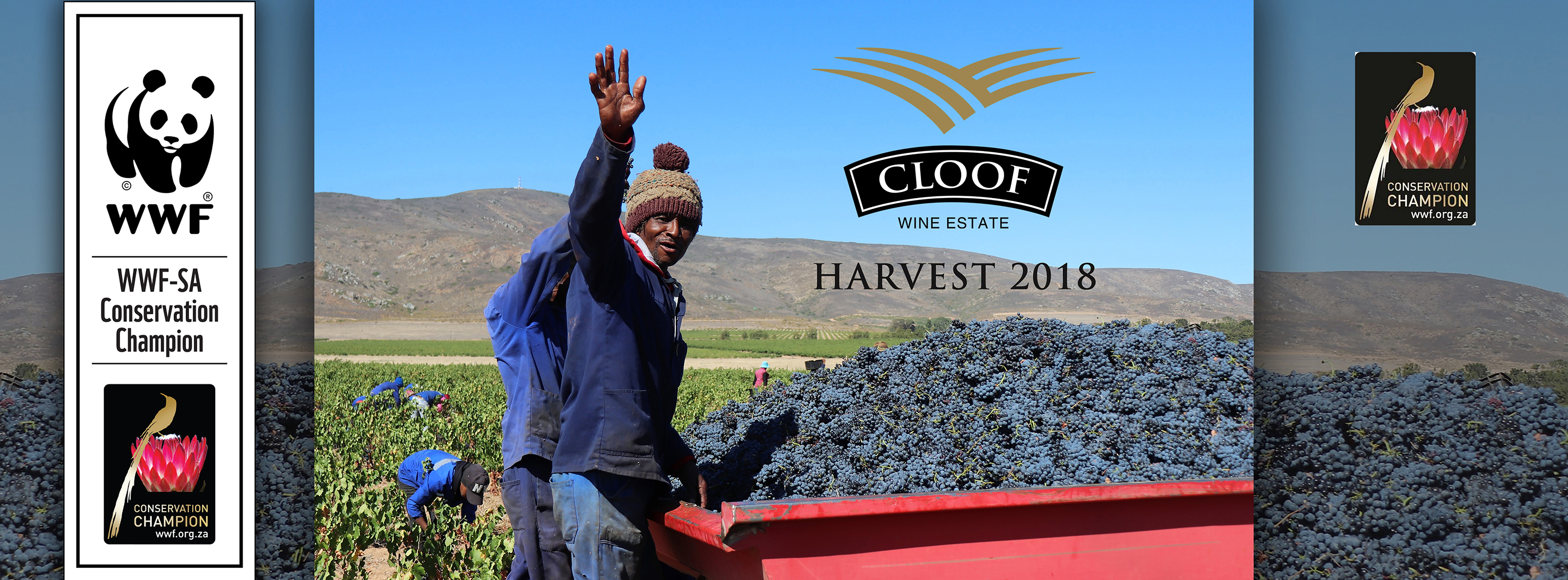 Cloof 2018 Harvest 67