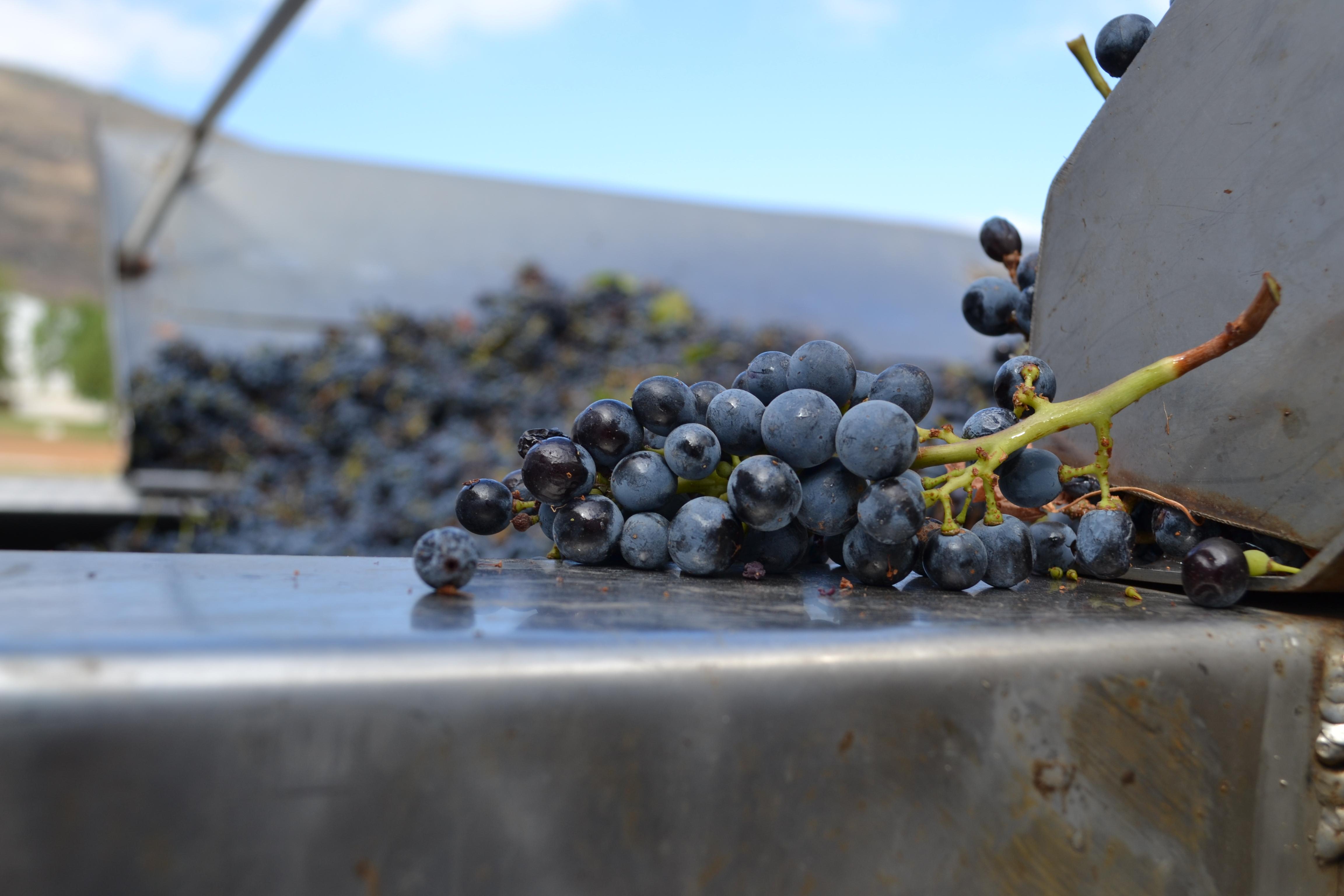 Cloof wines - Cabernet Sauvignon
