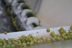 Cloof Harvest Sauvignon Blanc