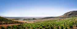 Cloof Wine estate view