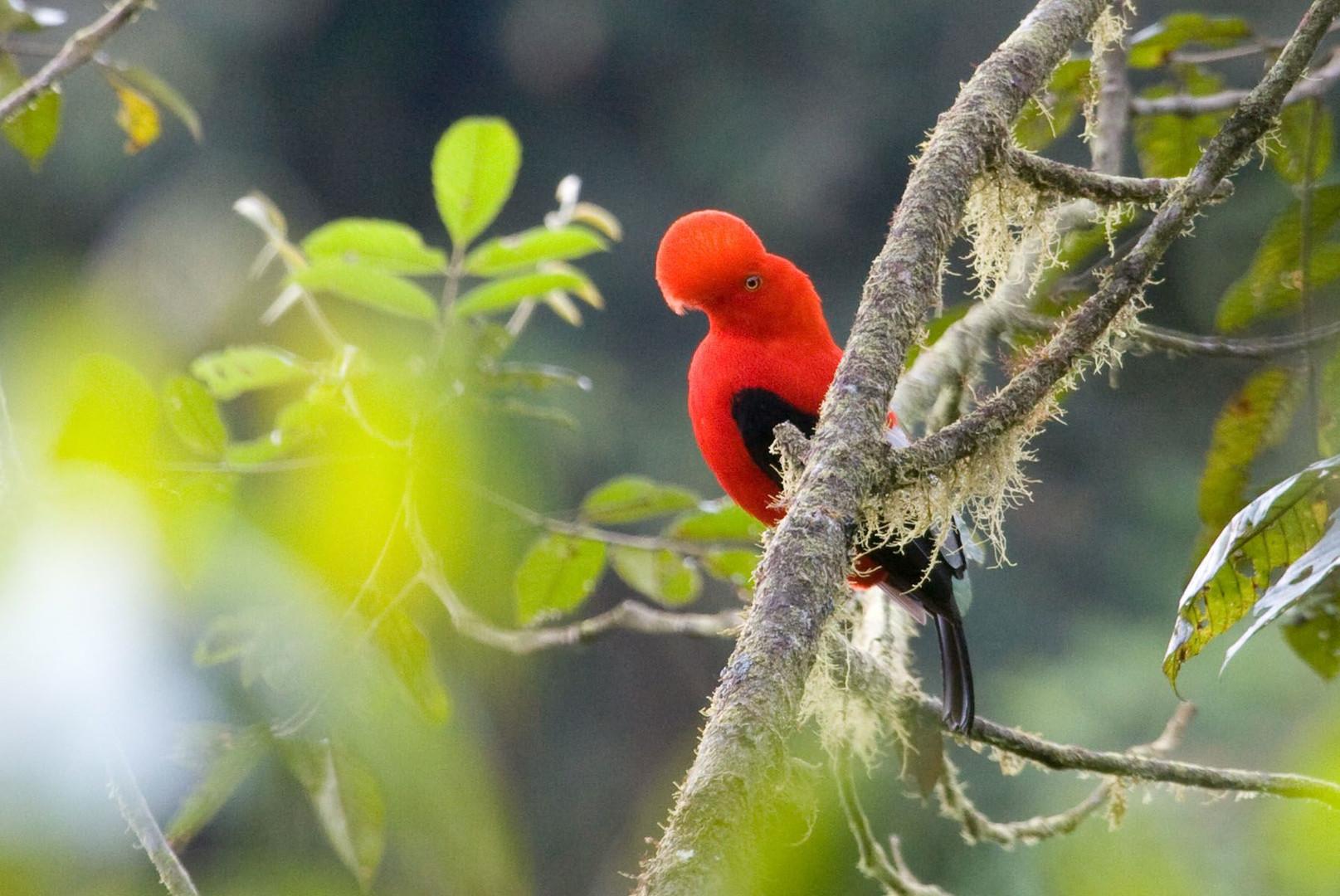 1.4 El paraíso de los observadores de aves de Maquipucuna.jpg