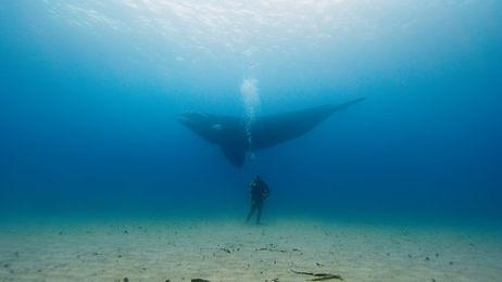 bm with whale.jpg