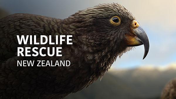 wildlife-rescue-new-zealand_thumb_1920x1