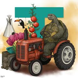 Tobias the Tortoise