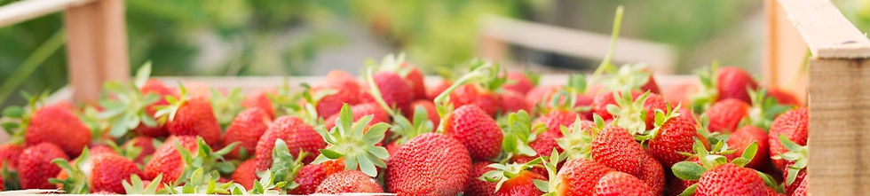 Angel_Farms-strawberries-banner2_edited_