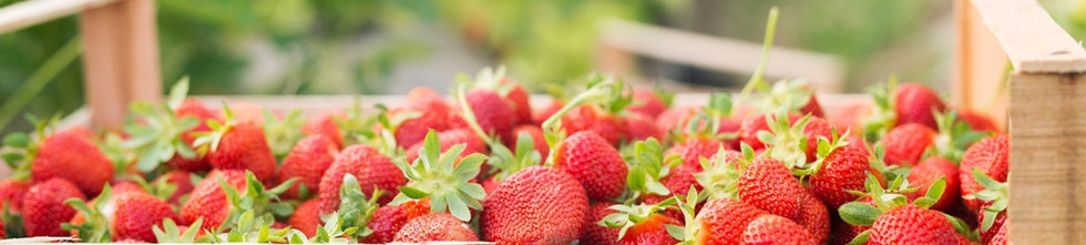 Angel_Farms-strawberries-banner2_edited_