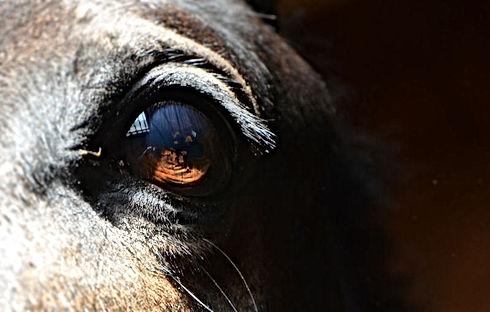 Tondre son cheval avec la Fleuterie