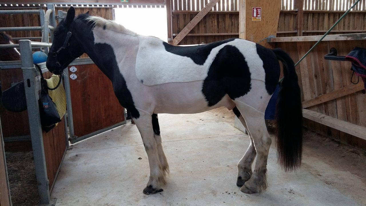 Tondre son cheval lister