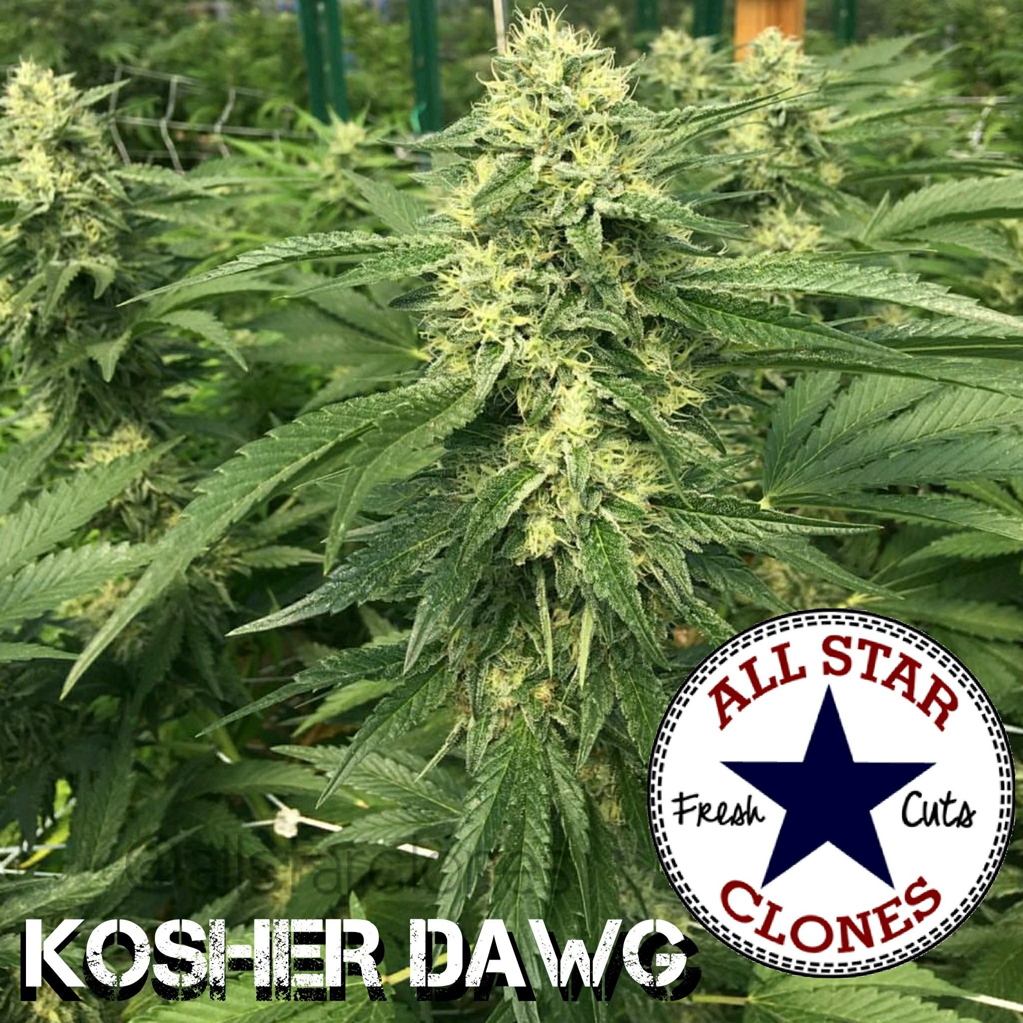 DNA Kosher Dawg