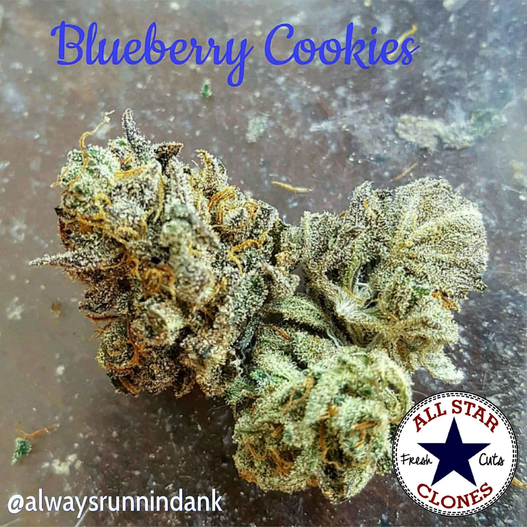 Blueberry Cookies - Medicine Man