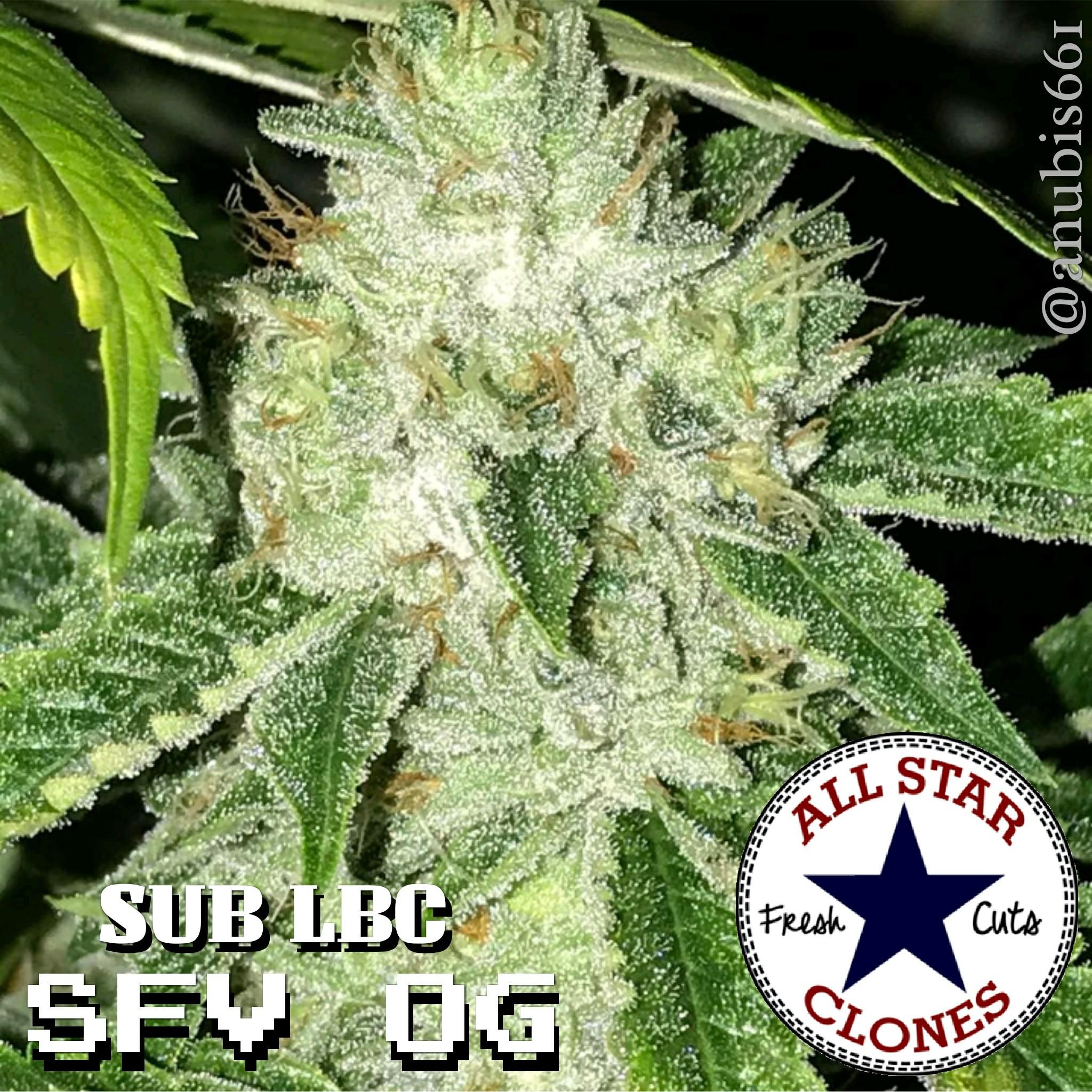 SFV OG - Sub LBC cut