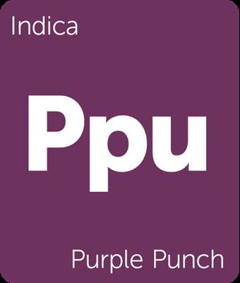 Purple Punch Clones