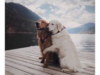 ¡Felíz día del amor y la amistad!