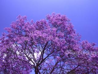 Es momento de florecer…