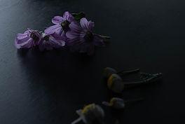 08_Herbario.jpg