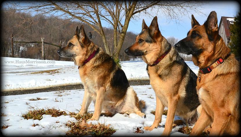 MAR 8 2015 - DOGS 50.jpg