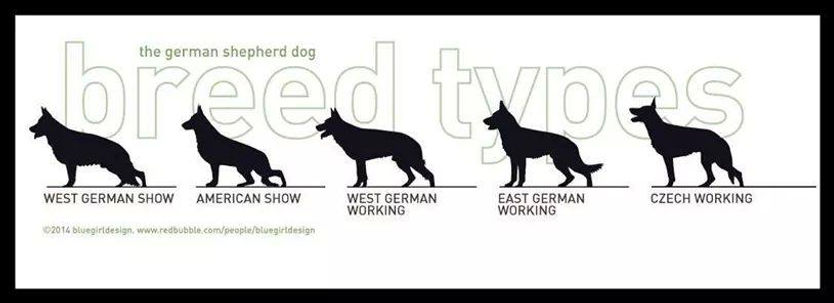 gsd breed types.jpg