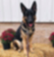 AKC sin sbn swn TITLEs - LUCY - OCT 12