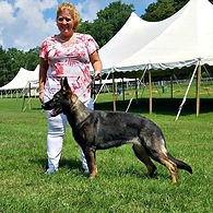 UKC Champion Geman Shepherd Dog