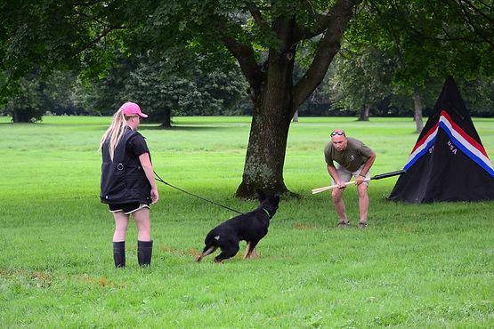 German Shepherd Puppy Schutzhund