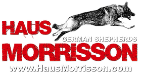www.hausmorrisson.co