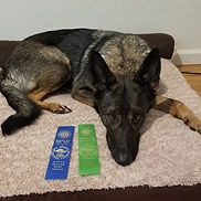 AKC Beginner Novice BN Title